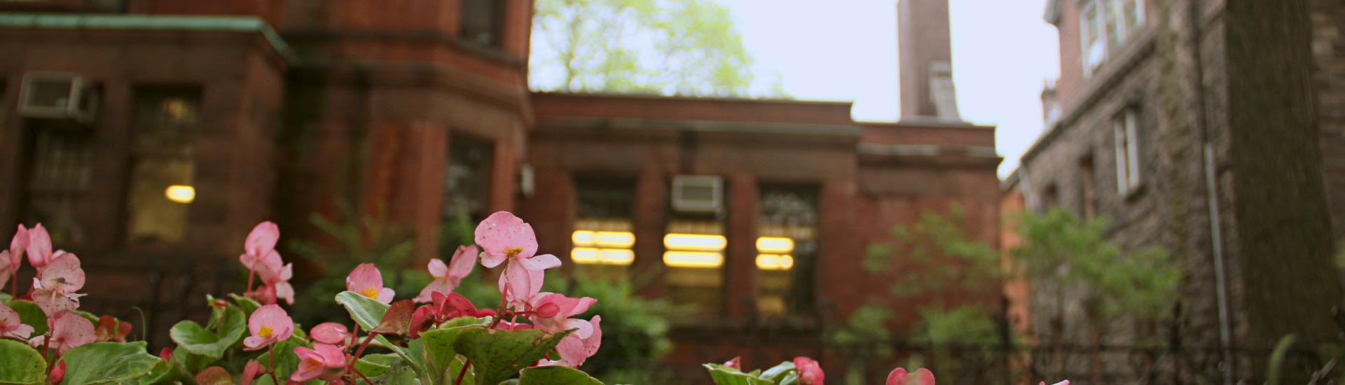 Pink flowers in the foreground of 121 St George